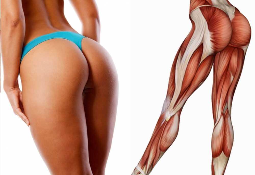 Мышцы на попе картинка